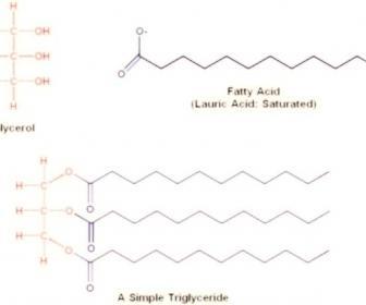 Triglicéridos en sangre más bajos