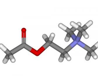 Acetilcolina: Acetilcolina para qué se utiliza