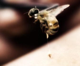 Veneno de abeja (apipuntura)