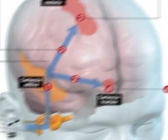 Pituitaria que es