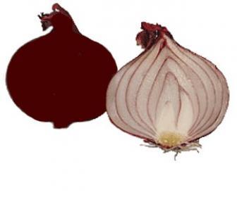 La cebolla morada