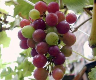 Uvas en cosmética