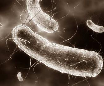 Curas naturales de Escherichia coli