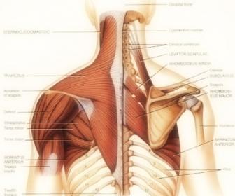 Ejercicios libres para la espalda