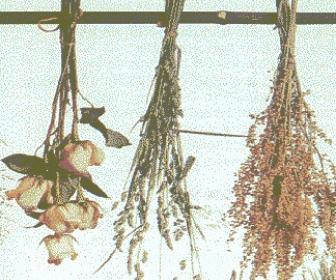 Plantas medicinales secas