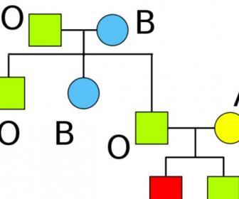 Grupos sanguíneos (combinaciones de grupos sanguíneos)