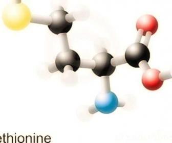 Metionina l - metionina