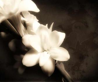 Cuidando las orquídeas