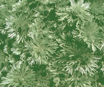 La planta de Artemisia