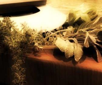 Plantas en tratamientos anticelulíticos
