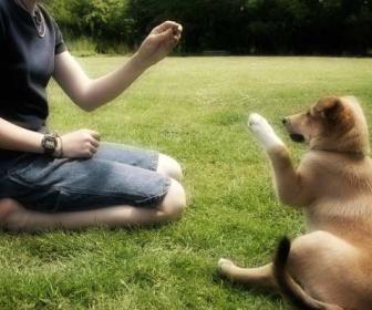 Cuidando a un perro