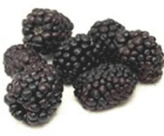 Rubus fruticosus o zarza