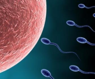 Esterilidad, causas de esterilidad, diagnóstico, tratamiento,