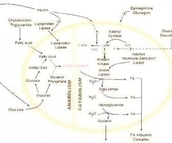 Triglicéridos altos: dieta y remedios