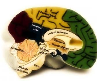 Tumor cerebral benigno